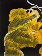 Öl Siebdruck Malerei Siebdruckplatte Andreas Mitterer 2012